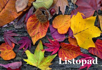 23511177 - abstract background of autumn leaves. autumn background.